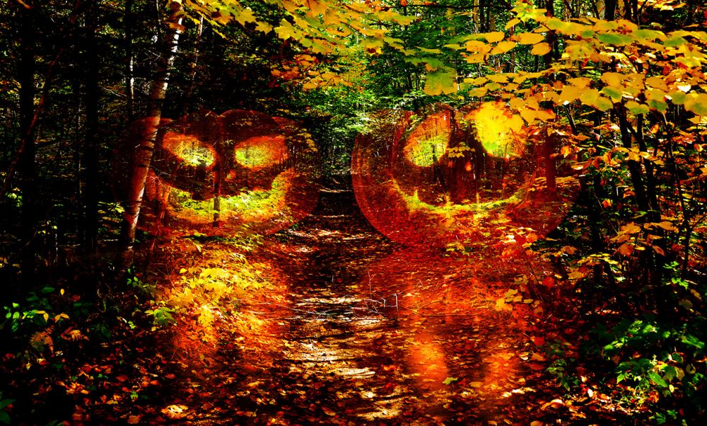 Halloween Scary Wood 1 - Stock Photo