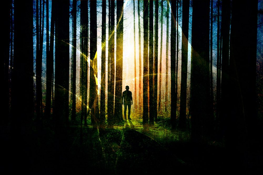 Surreal Apocalyptic Woods 01 - Stock Photo